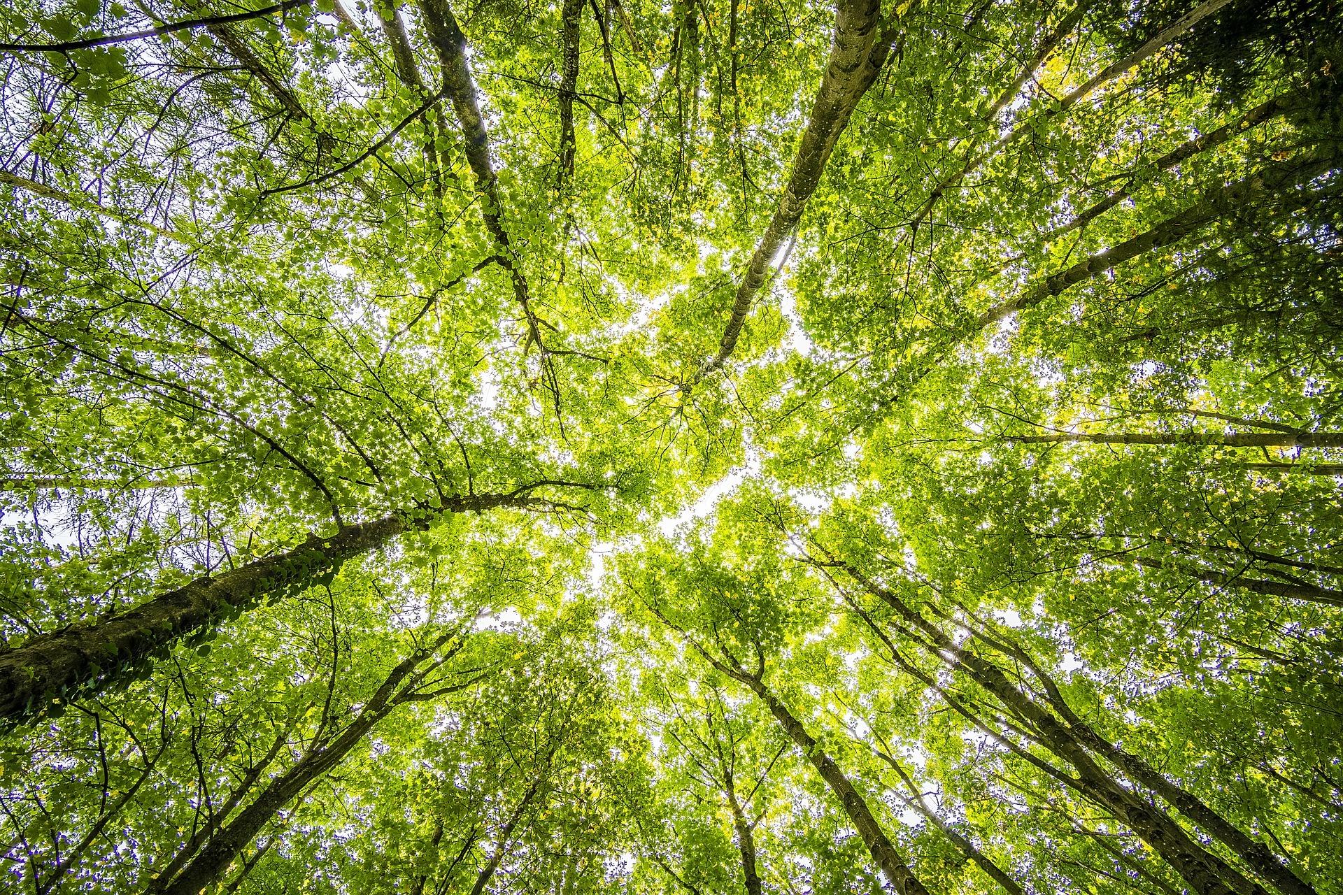 Viața secretă a copacilor- între știință și miracol