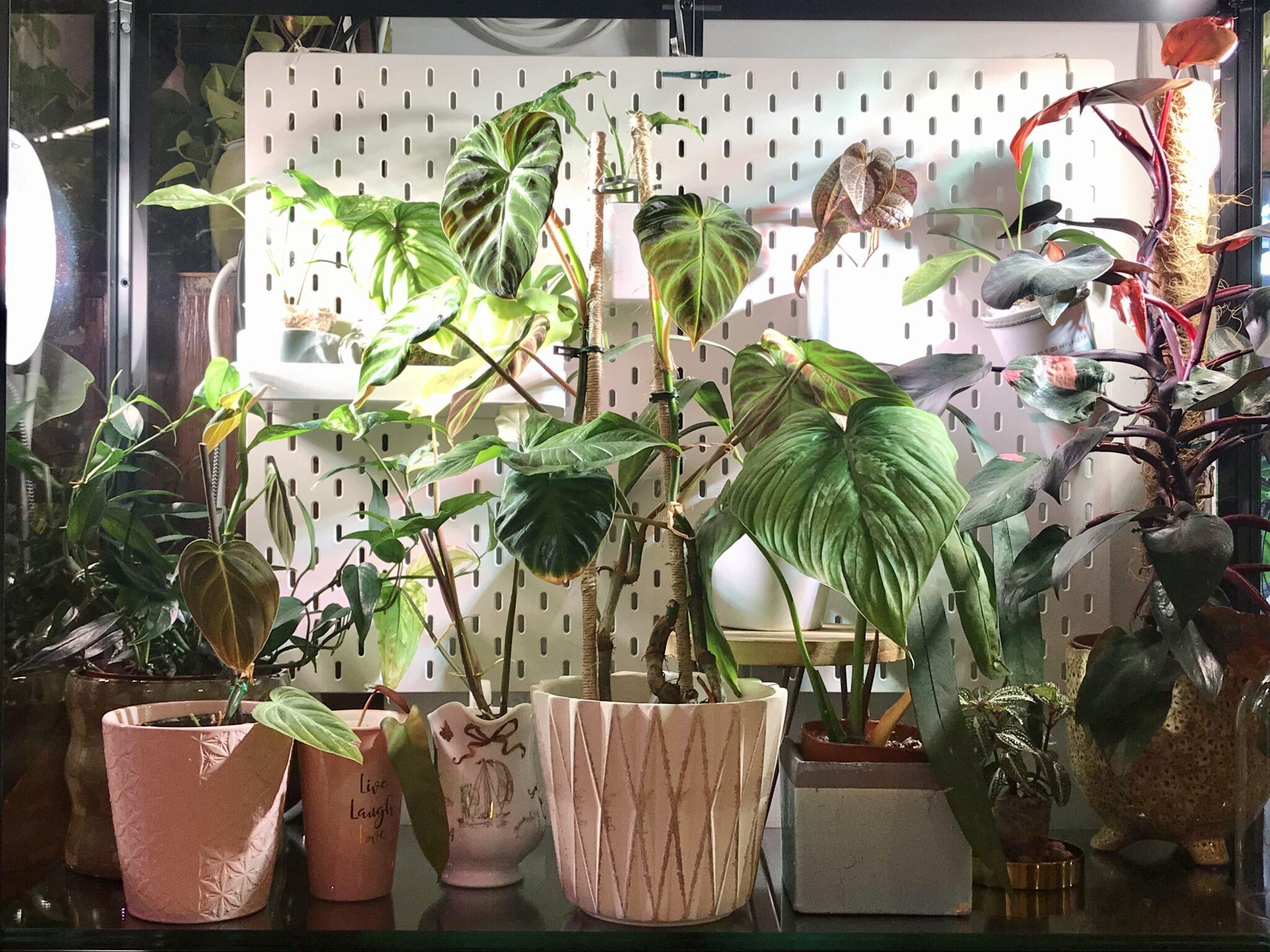 #prieteniiverziaidianei (13): Planuri pentru grădina din apartament în 2021