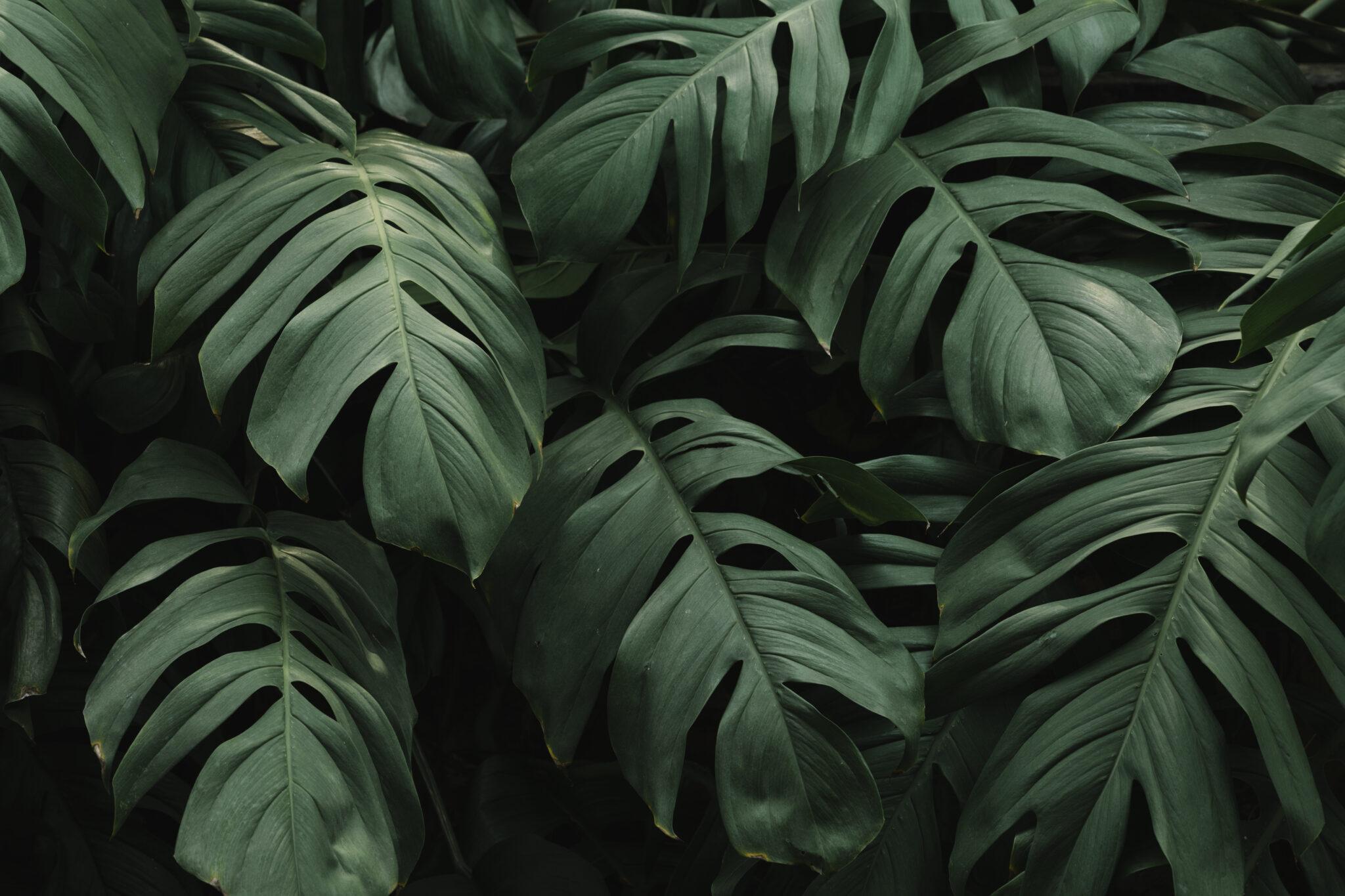 """#prieteniiverziaidianei (17):  """"Afacerile cu plante rare sunt în creștere"""""""